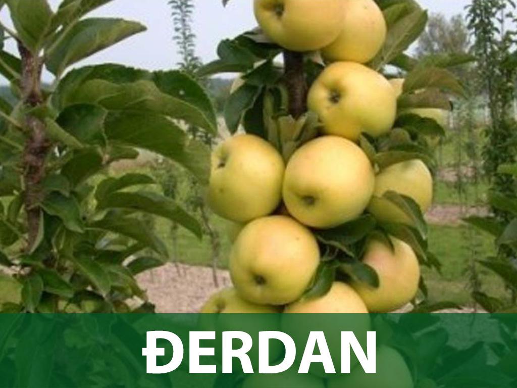 sadnice nektarine