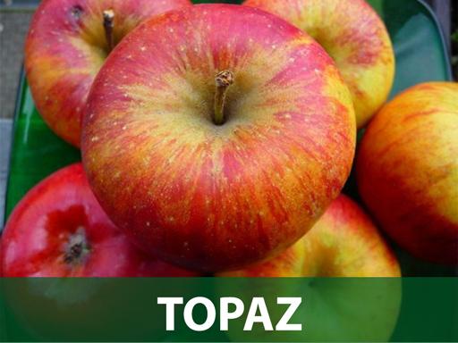 Topaz sadnice jabuke